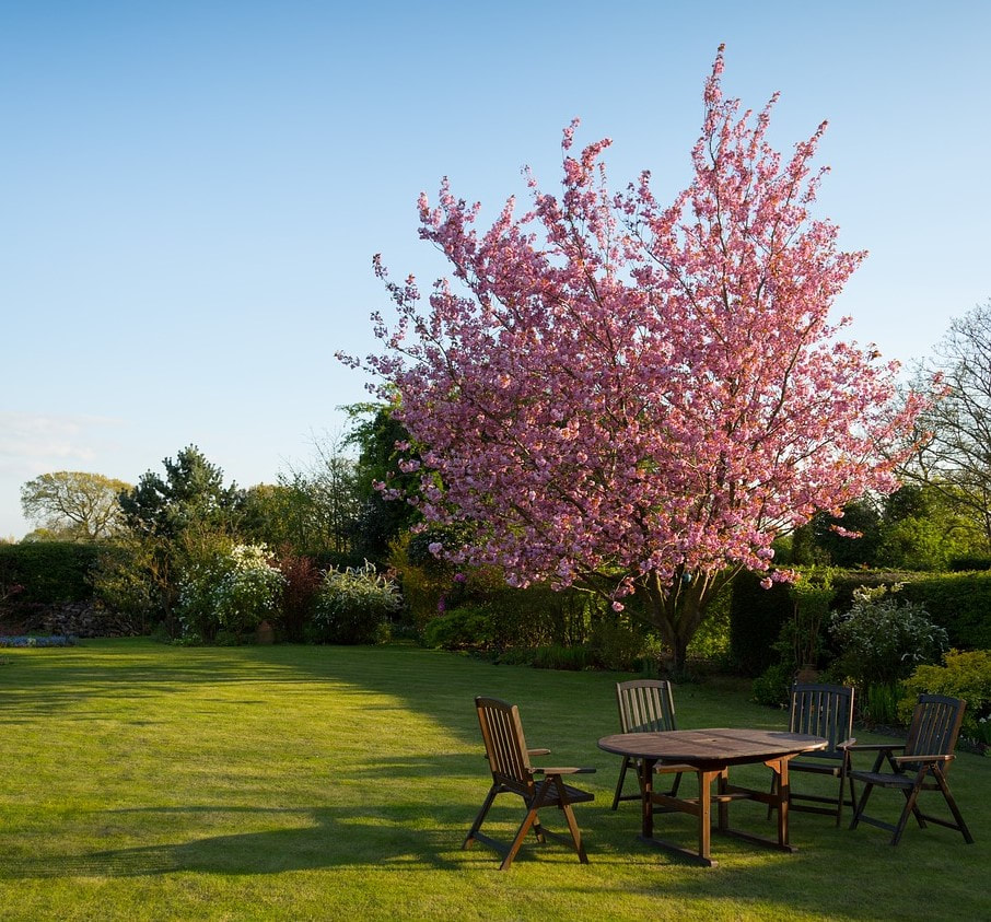 A pink tree that was recently planted in a customer's backyard
